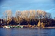 Bild: Am Rhein
